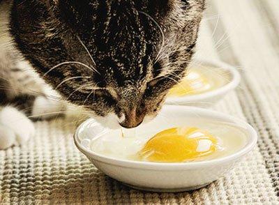Можно ли котам давать яйца сырые и вареные