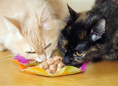 Какое время можно оставить кошек одних дома. На сколько дней можно оставить кошку дома одну: советы опытных кошатников
