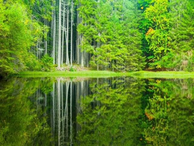2. Boubínský prales | Nejhezčí přírodní místa / příroda v Česku