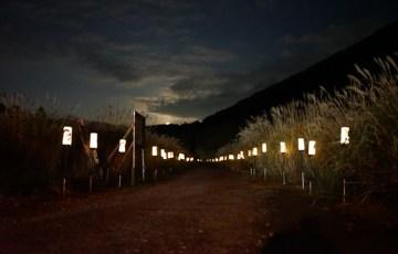 箱根 ススキ草原