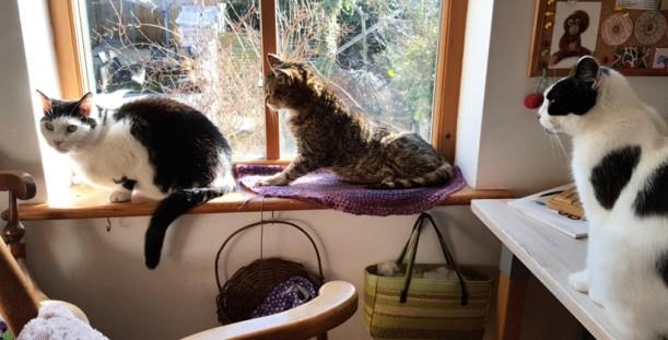 cat-window