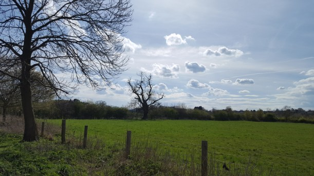 trees-and-fields