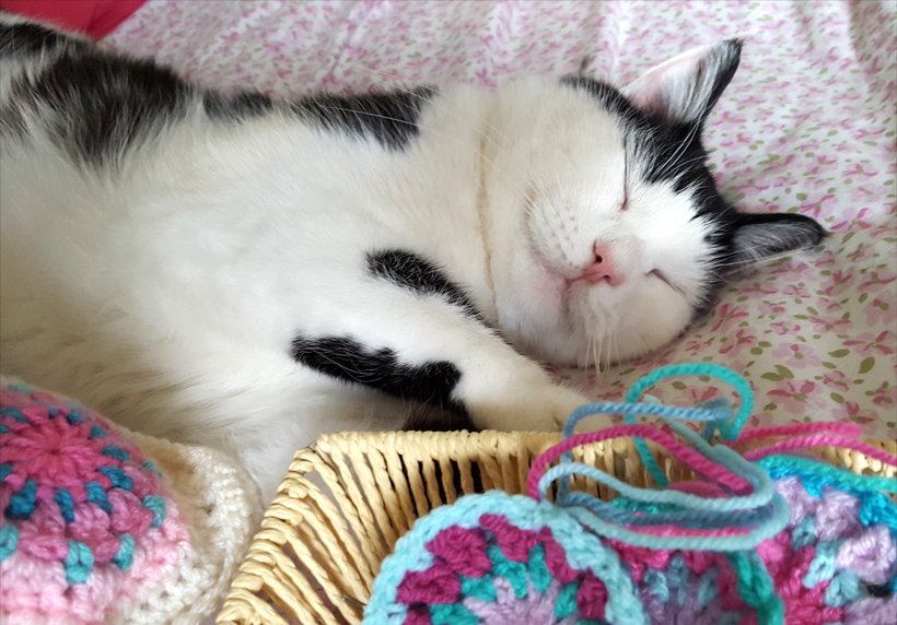 pogo-snoozing