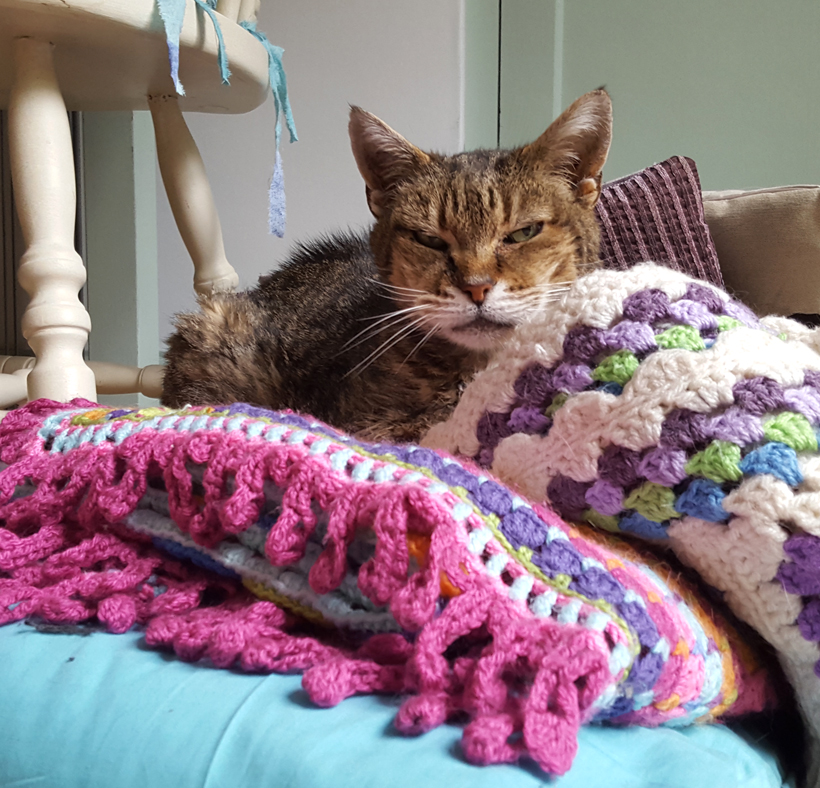 tigger-on-the-blankets