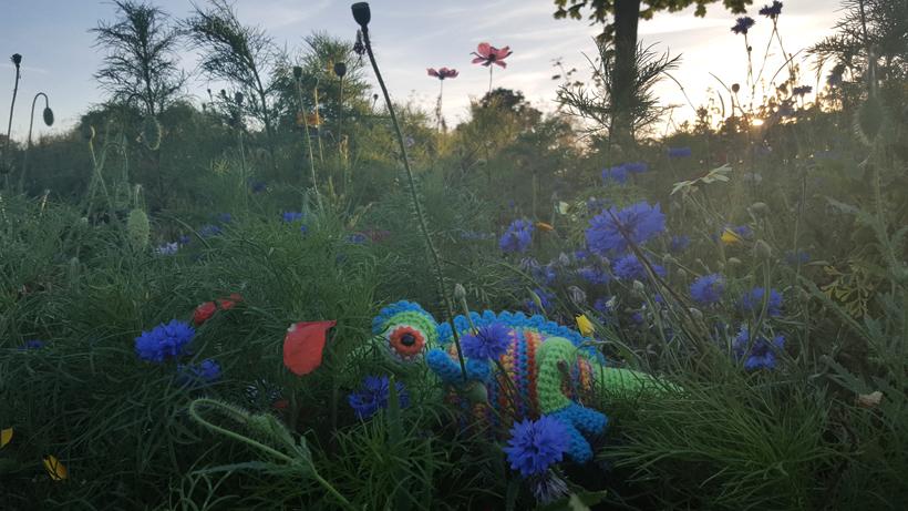 blue-chameleon