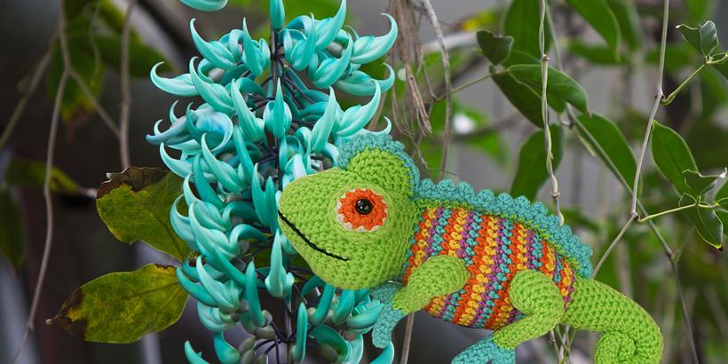 jade-vine-and-chameleon