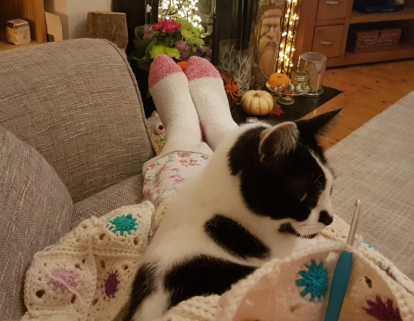crochet-and-cat