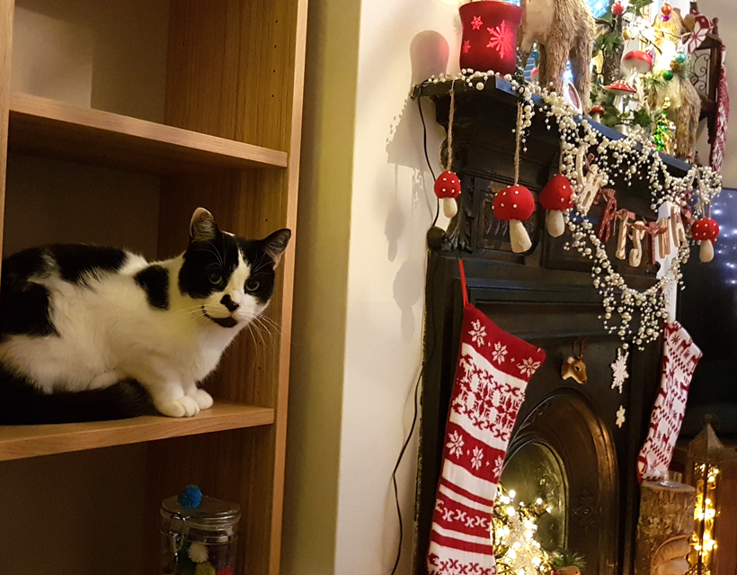 mojo-and-his-stocking