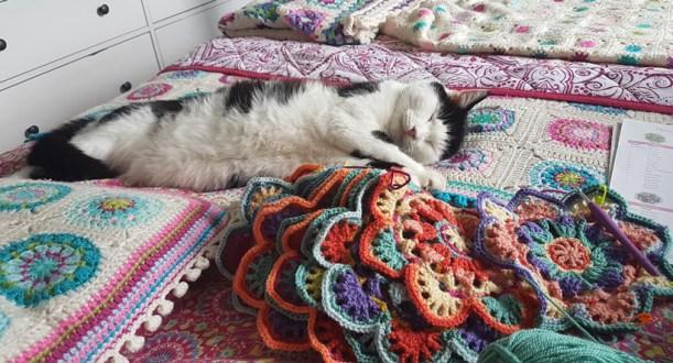 pogo-and-the-crochet-stars