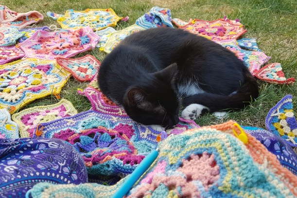 rubick-snoozing-on-the-blanket