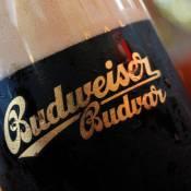 Budweiser Budvar dark lager