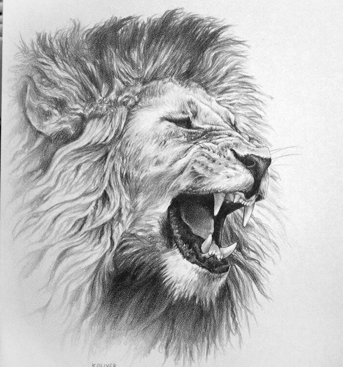 Lion Tattoo Designs Body Pics Image Ideas