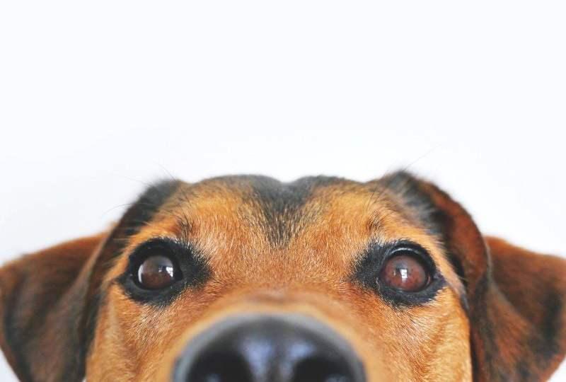 pers watchdog