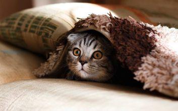 pencinta kucing, takut kucing
