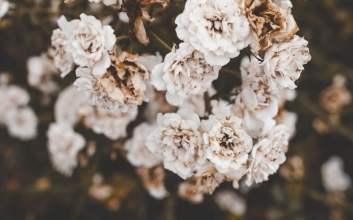 bunga terakhir