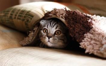 nyemil kucing