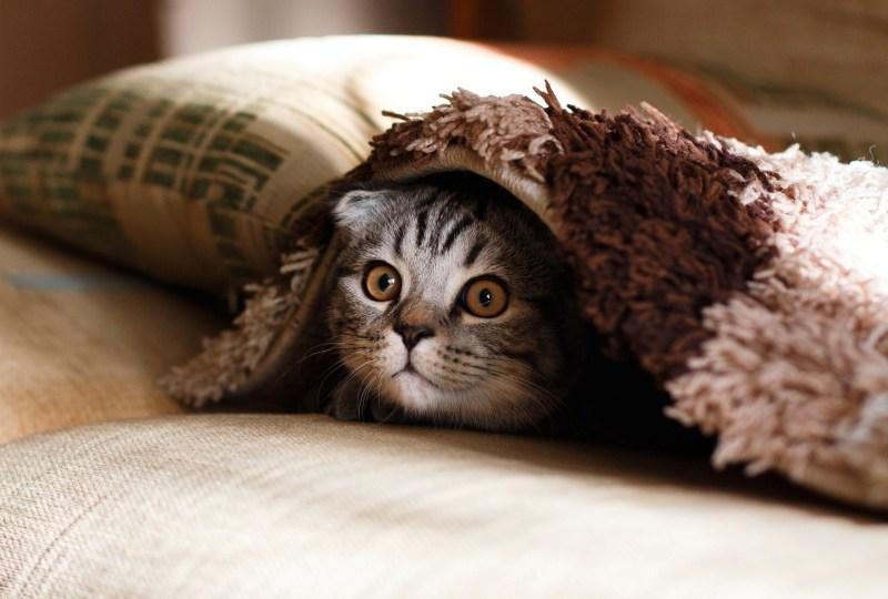Download 64+  Gambar Kucing Hidup Terbaru Gratis