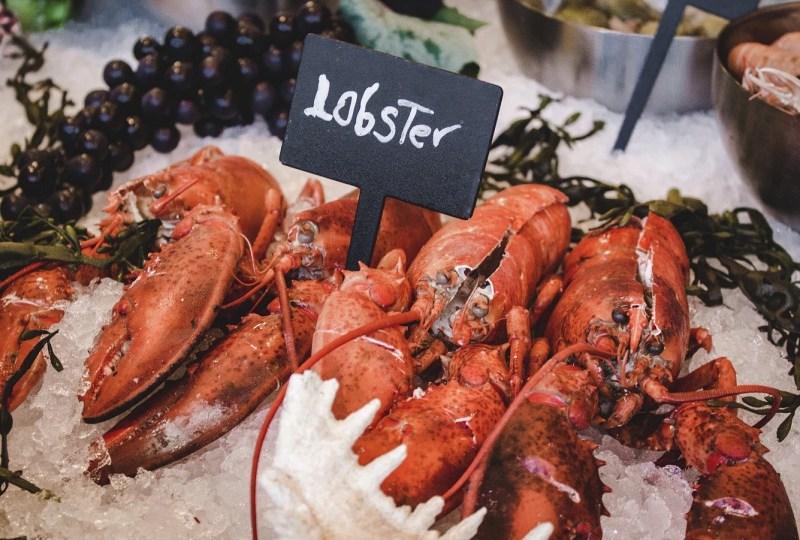 Surat Terbuka Untuk Pak Edy Prabowo Soal Ekspor Benih Lobster dari Mahasiswa Perikanan