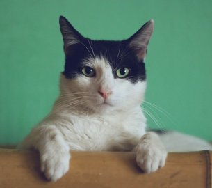 Ngakunya Pecinta Kucing, tapi Cuma Cinta Kucing Impor