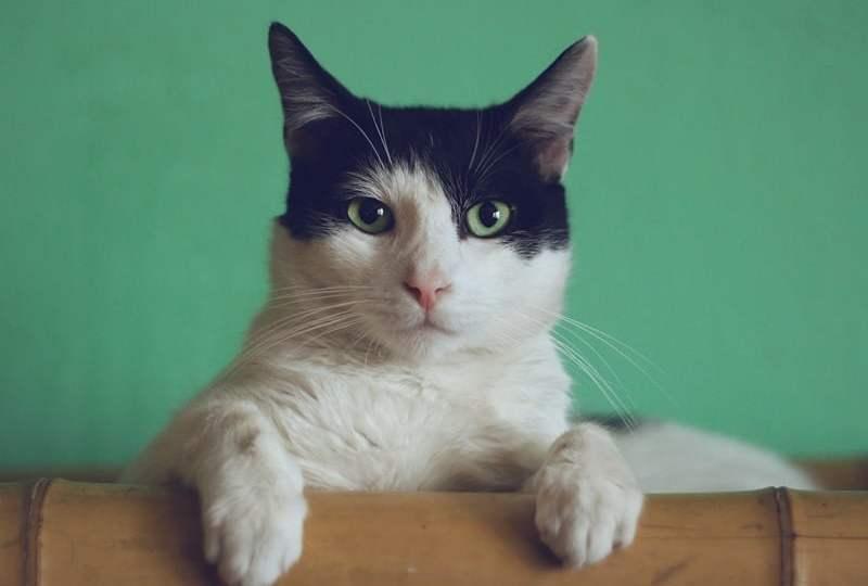 Beragam Cara Klaim Wilayah: Dari Kasus Natuna Utara Sampai Kucing Rumahan
