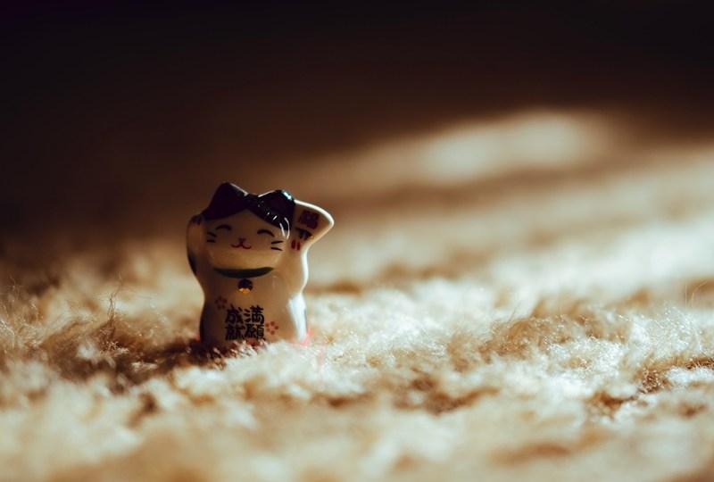 Menguak Misteri Keberadaan Patung Kucing di Sebuah Toko China