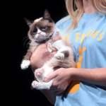 kebiasaan kucing menyebalkan tanda-tanda kucing arti kelakuan kucing grumpy cat mojok
