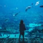 sarjana pendidikan ikan