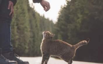 jangan memberi makanan kucing tulang ikan tulang ayam mojok.co