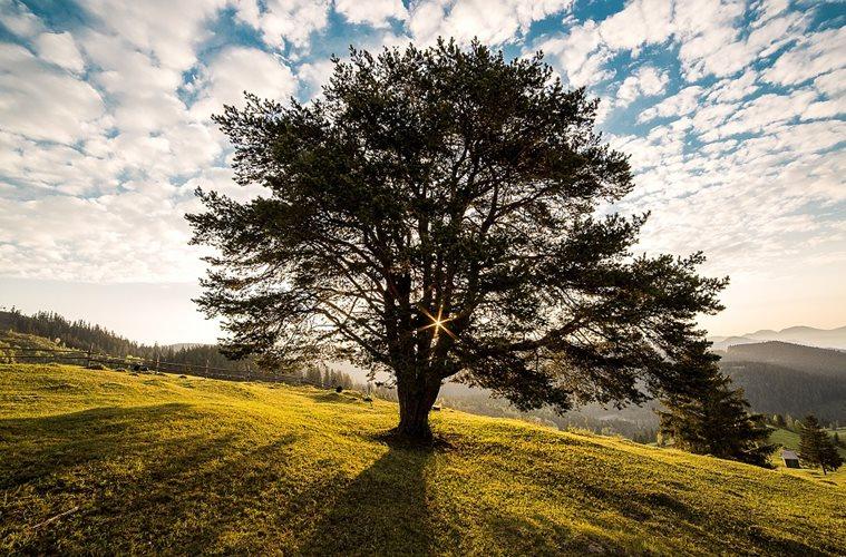 Kalau Saya Menyembah Pohon, Anda Mau Apa?
