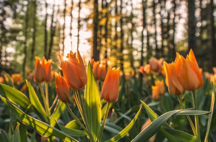 Mengapa Jogja Seharusnya Bersyukur Para Alay Merusak Taman Bunga?