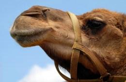 Mengapa Sebaiknya Jangan Mudah Baper dengan yang Berbau Arab?