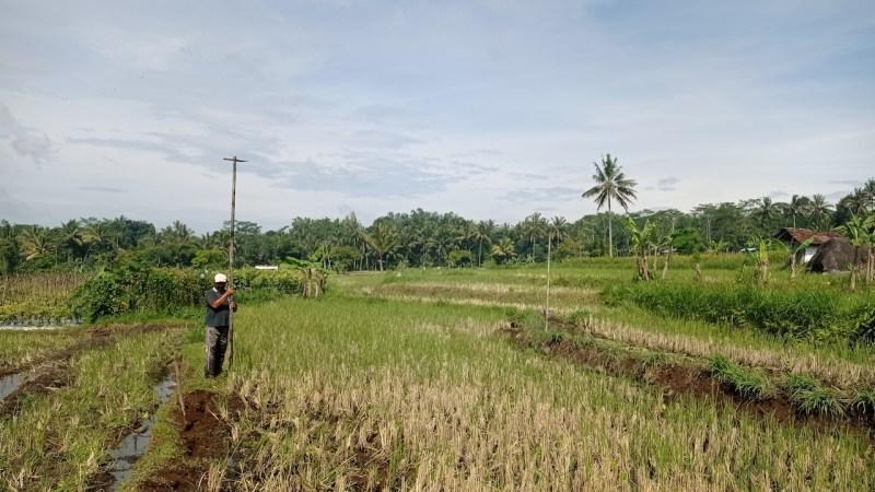 Rudi (48) petani di Dusun Cancangan mendirikan tenggeran untuk burung hantu yang sempat roboh.