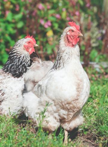 Muncikari ayam kampus di Yogya tobat meski pendapatannya puluhan juta rupiah