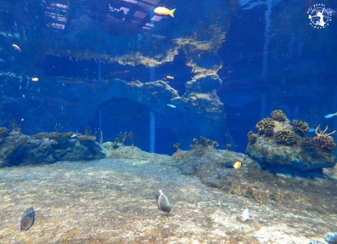 Mój Punkt Widzenia Blog - rafa i różne gatunki ryb w Afrykarium