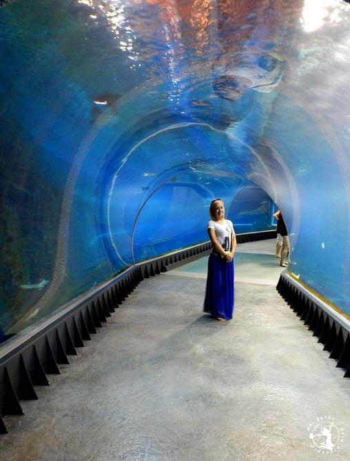 Mój Punkt Widzenia Blog - tunel w akwarium, Afrykarium