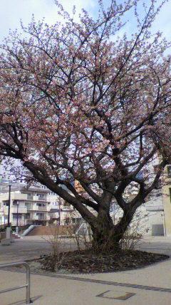 20100219-0220_nishiizu16