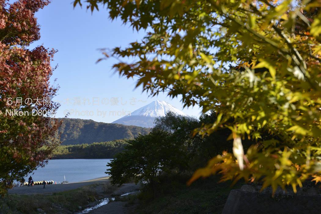 [6]色づく紅葉と富士山