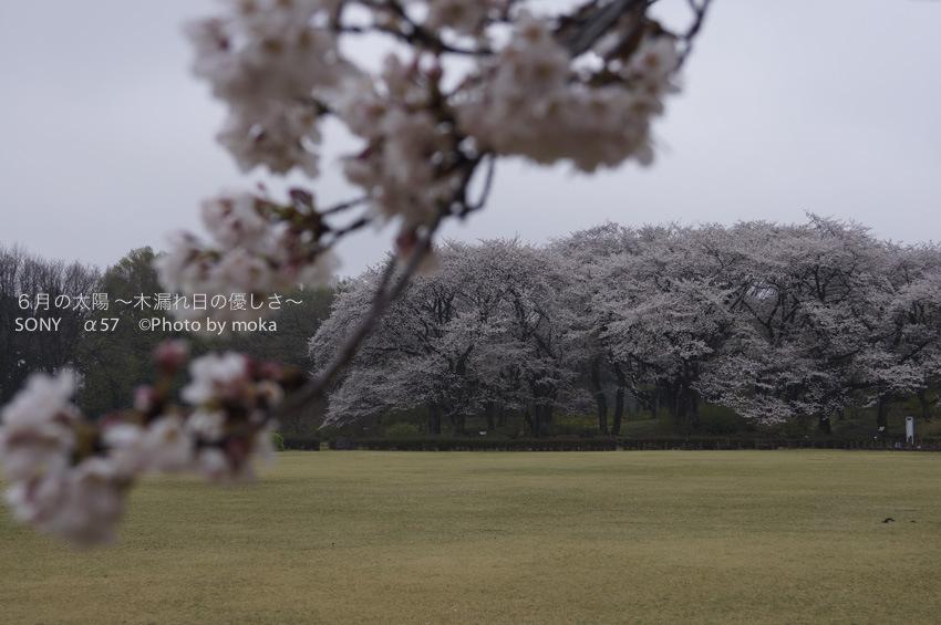 [6]まるで貸切の神代植物公園