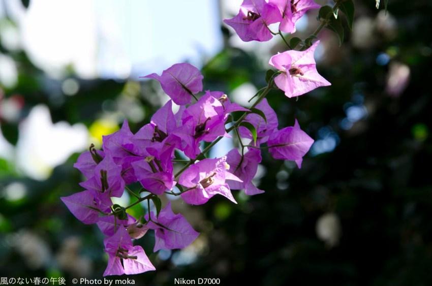 20120227_kawaguti-greencenter42