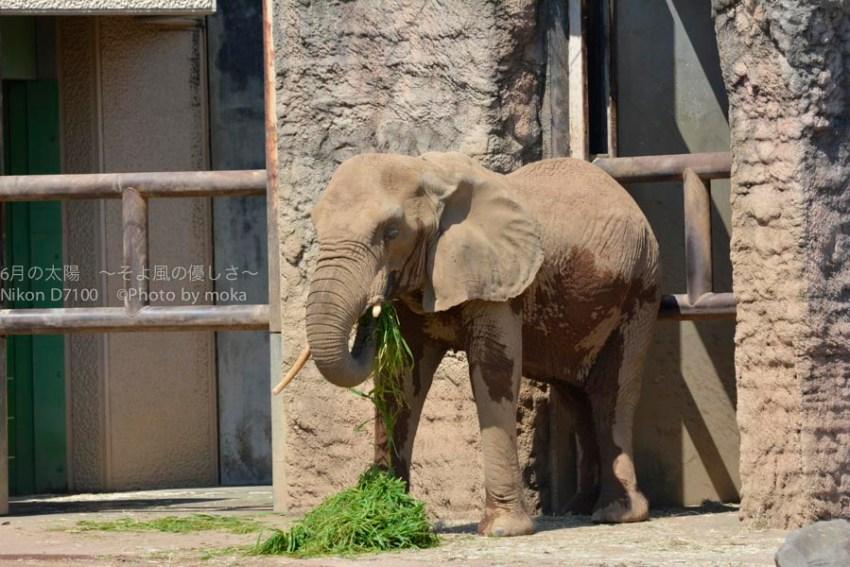 20140916_tama-zoo094
