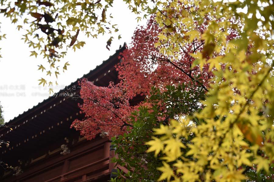 20141130_hondoji005