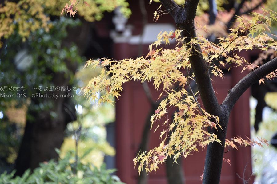 20141130_hondoji017