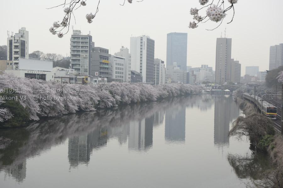 [6]外堀沿いに咲く桜並木と線路