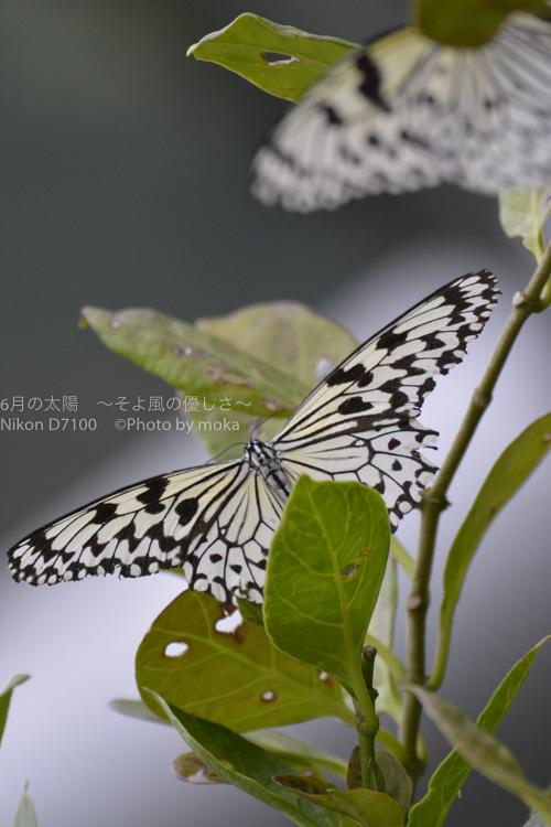 20150825_tama-zoo104