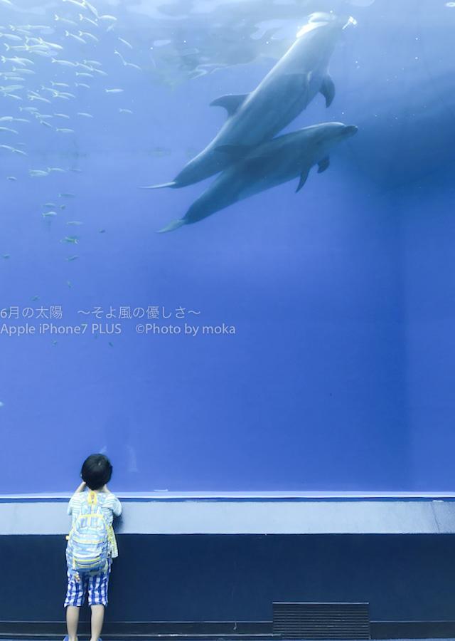 [6]イルカと少年