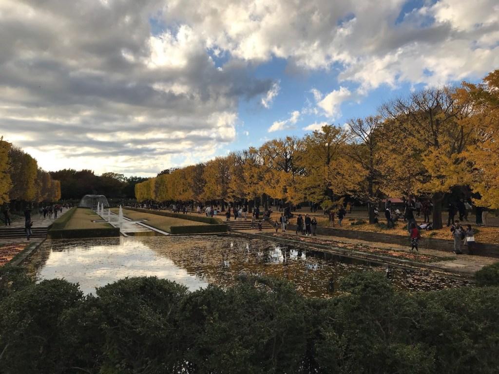[6]見頃を迎えている昭和記念公園のイチョウ並木