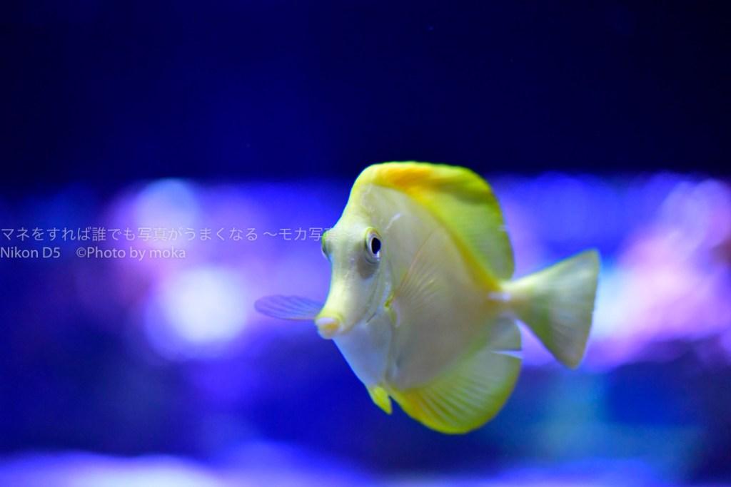 【ソラマチ水族館】すみだ水族館の人気撮影ポイントを紹介