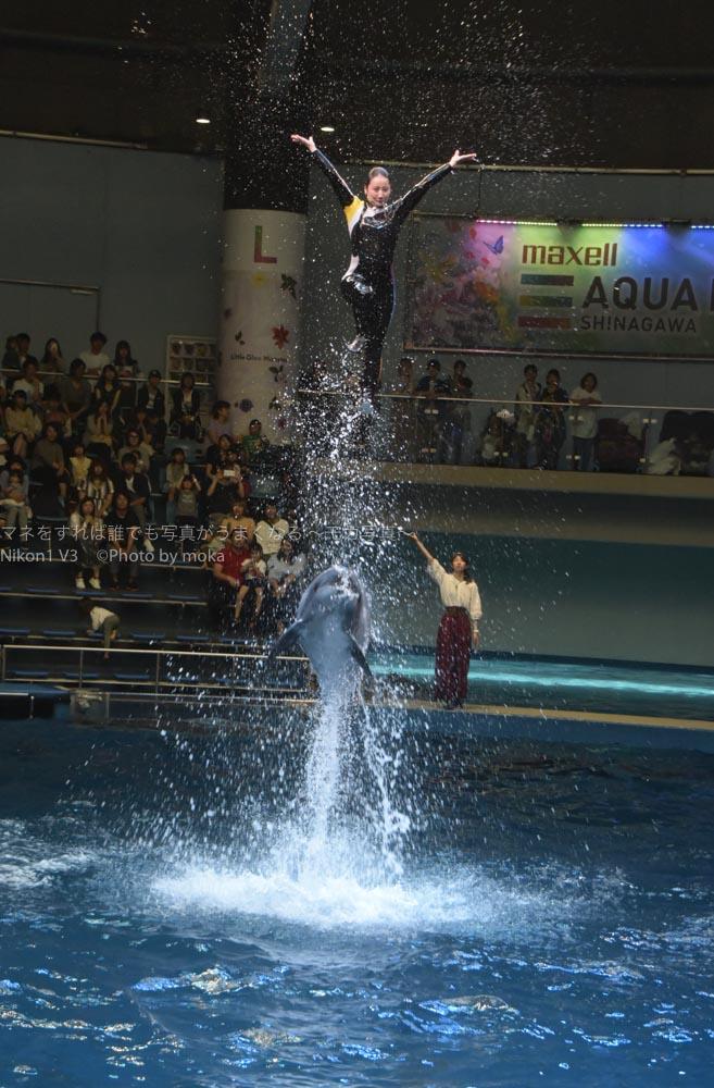 [6]イルカと一緒に大ジャンプ!!