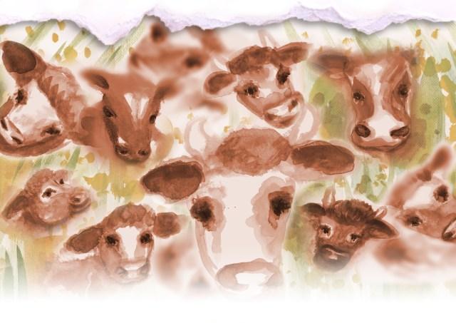 Cows&stuff