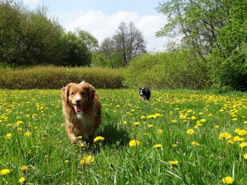 jak znalezc zaginionego psa